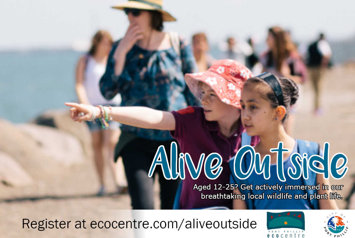 Alive Outside Postcard with Penguin