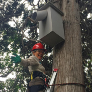 Building Nesting Boxes for Wildlife