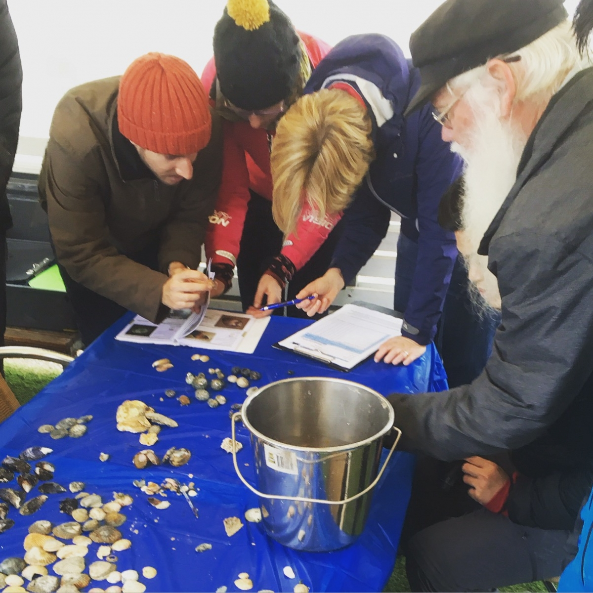 Shell-Sorting Marine Biologists for a Day